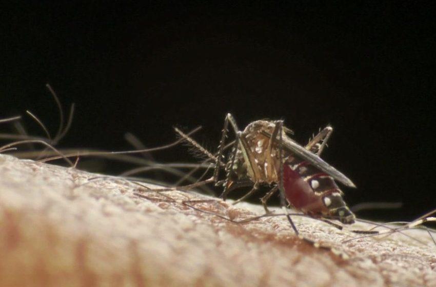 Câmara de Maringá aprova multa de R$ 1 mil para dono de imóvel com foco de dengue